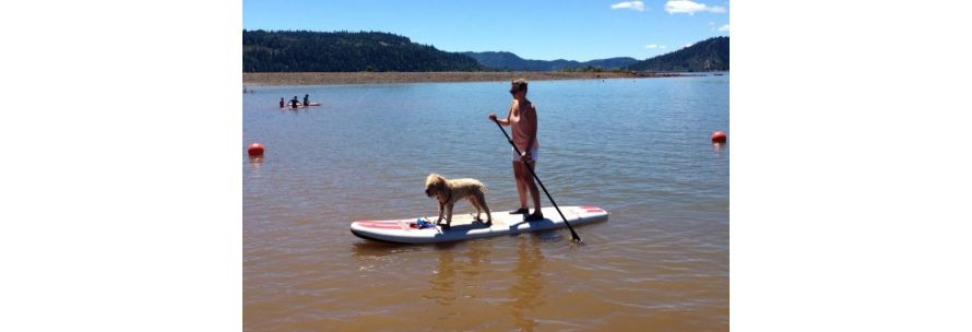 Dog riding inflatable paddle board SUP